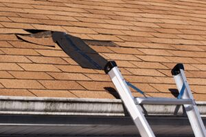 5 Roofing Pests that Can Damage Your Roof